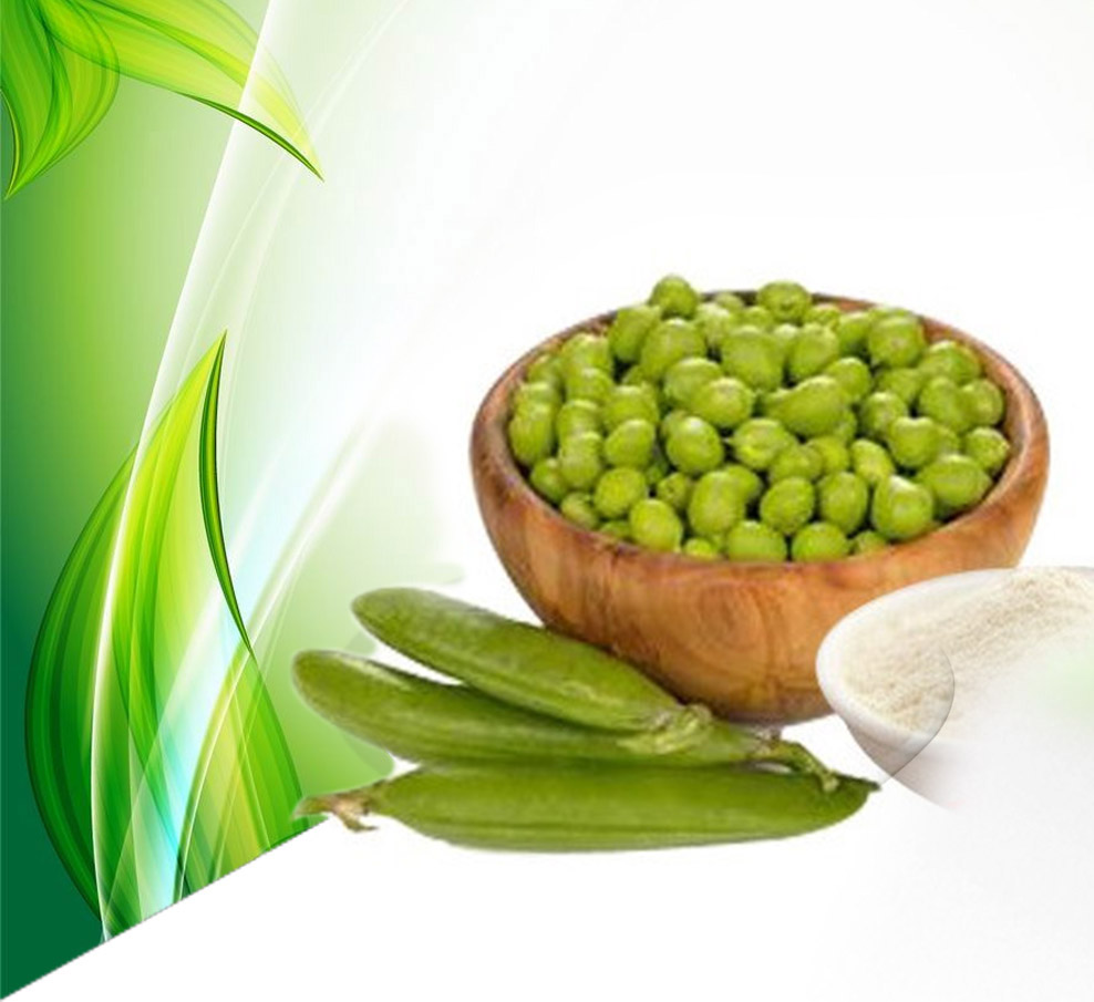 Isolated Pea Protein